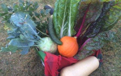 Gartenbesichtigung im Rahmen der interkulturellen Woche
